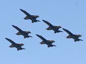 Blue Angels Hornet F/A-18A US Navy